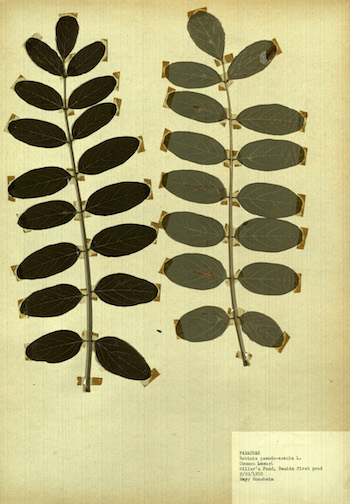 Herbarium Sheets Collection