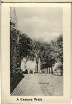The University of Wooster Souvenir Post Card - A Campus Walk