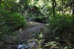 Wilkin Run bend 1, 08-2011