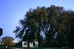 Trees and Libraries by Lee Lybarger