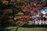 Campus Trees by Lee Lybarger