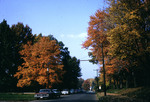 Street With Fall Trees