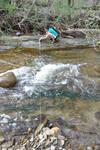 Rathburn Run knickpoint 1, 08-2011